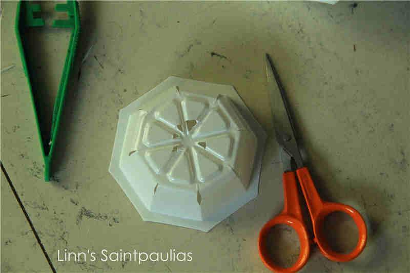Arrosage automatique (paresseux) pour la culture de Saintpaulias (rampant) Img_3319