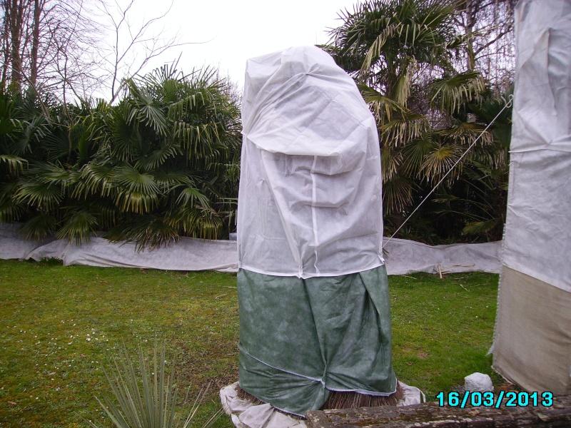 Mon jardin en seine et marne à 7 kms au nord ouest de Melun  Imgp3011