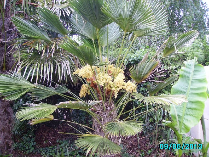 Mon jardin en seine et marne à 7 kms au nord ouest de Melun  Imgp3210