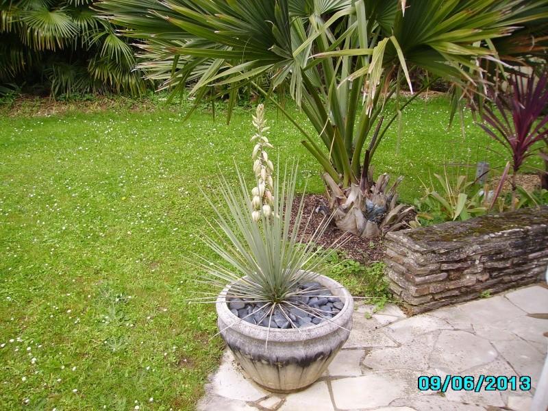 Mon jardin en seine et marne à 7 kms au nord ouest de Melun  Imgp3211