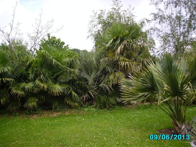 Mon jardin en seine et marne à 7 kms au nord ouest de Melun  Imgp3212