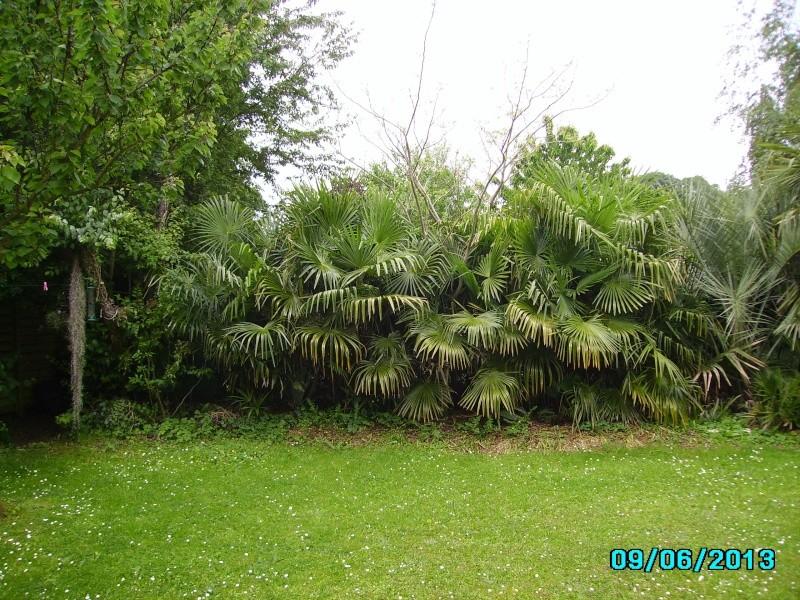 Mon jardin en seine et marne à 7 kms au nord ouest de Melun  Imgp3214