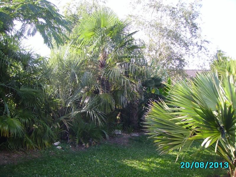 Mon jardin en seine et marne à 7 kms au nord ouest de Melun  Imgp3317