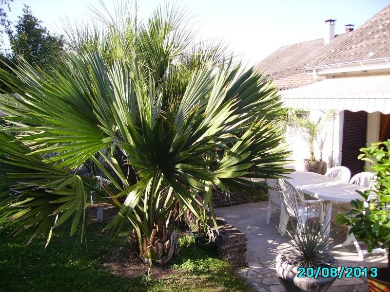 Mon jardin en seine et marne à 7 kms au nord ouest de Melun  Imgp3318