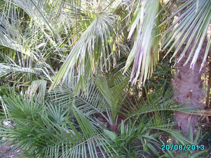 Mon jardin en seine et marne à 7 kms au nord ouest de Melun  Imgp3319