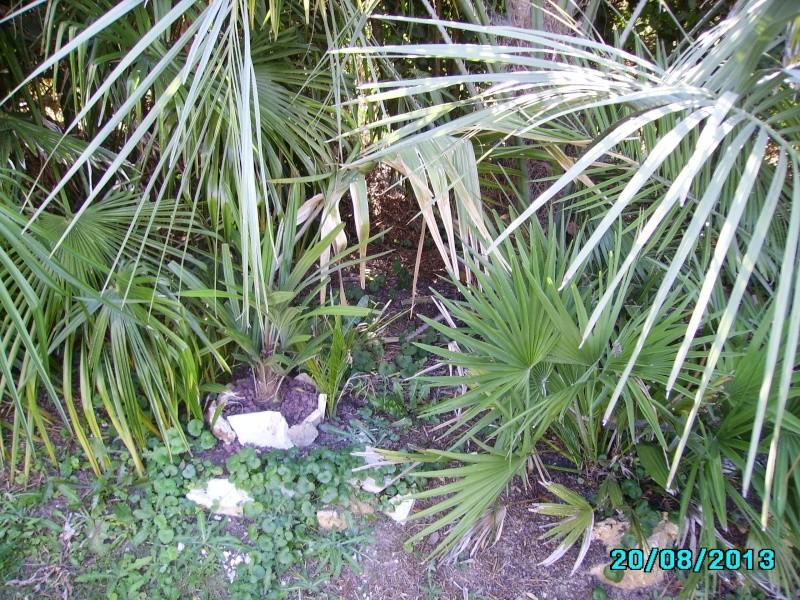 Mon jardin en seine et marne à 7 kms au nord ouest de Melun  Imgp3320