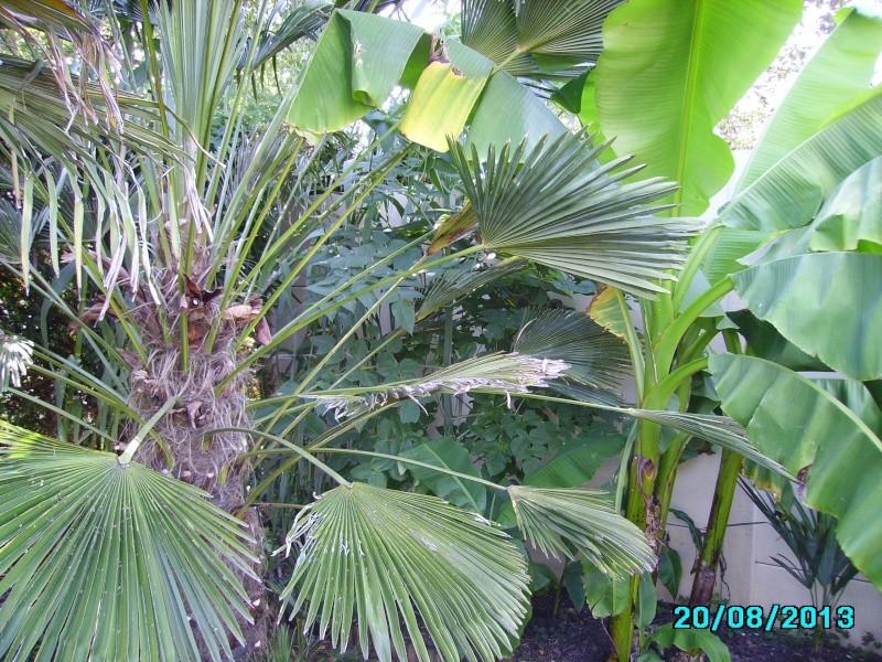 Mon jardin en seine et marne à 7 kms au nord ouest de Melun  Imgp3321