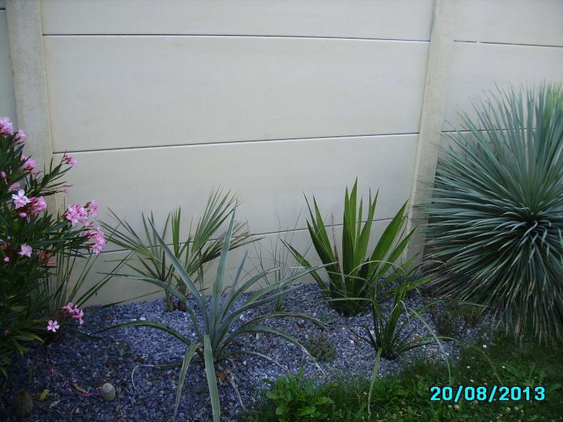 Mon jardin en seine et marne à 7 kms au nord ouest de Melun  Imgp3322