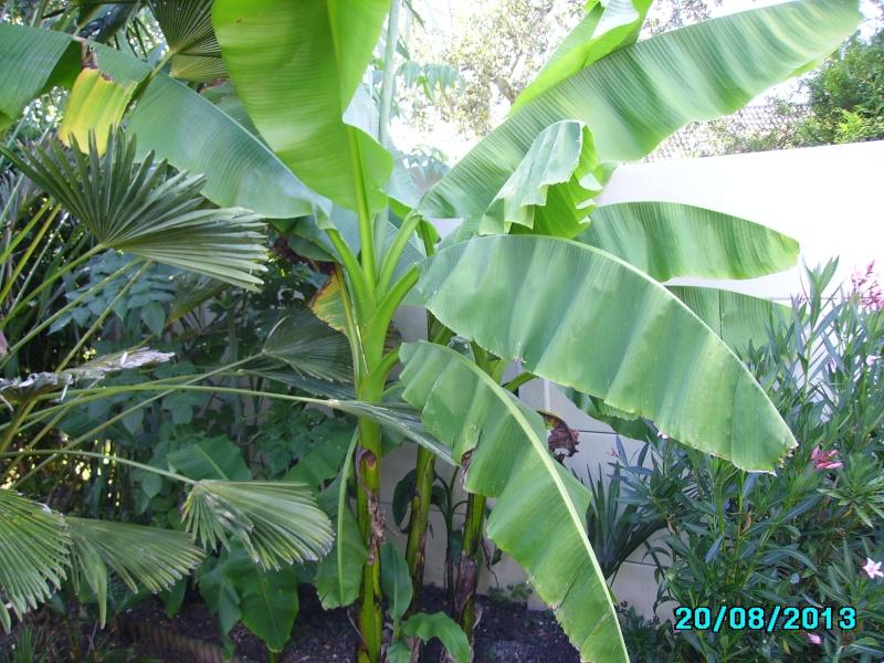 Mon jardin en seine et marne à 7 kms au nord ouest de Melun  Imgp3323