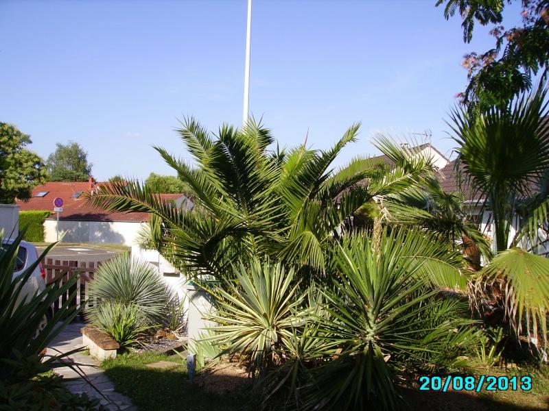 Mon jardin en seine et marne à 7 kms au nord ouest de Melun  Imgp3324