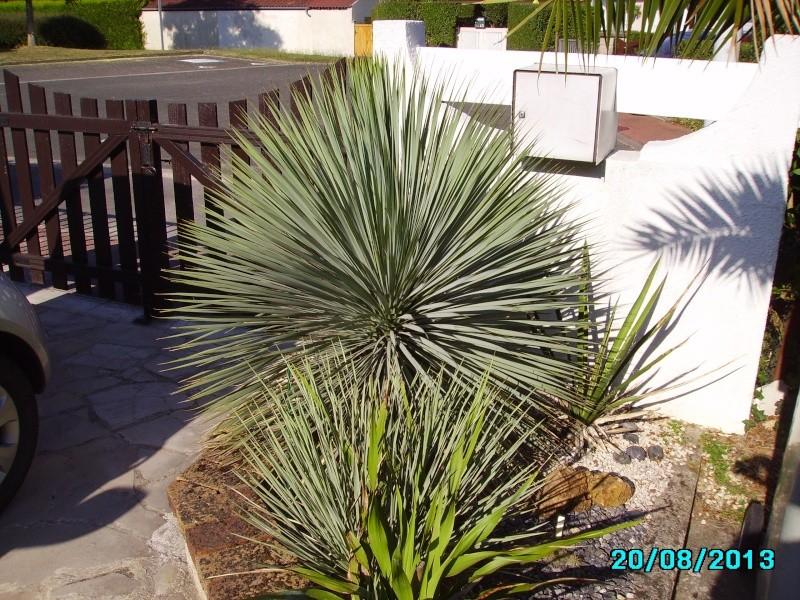 Mon jardin en seine et marne à 7 kms au nord ouest de Melun  Imgp3325