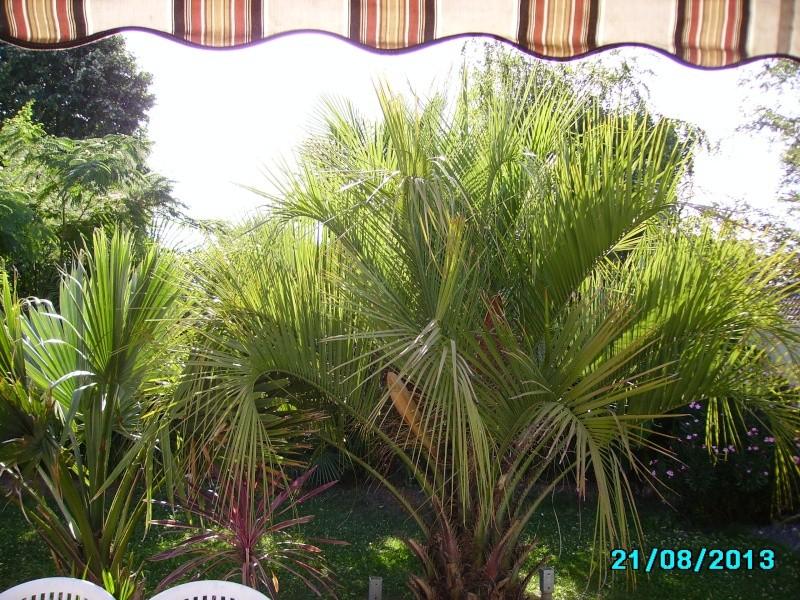 Mon jardin en seine et marne à 7 kms au nord ouest de Melun  Imgp3327