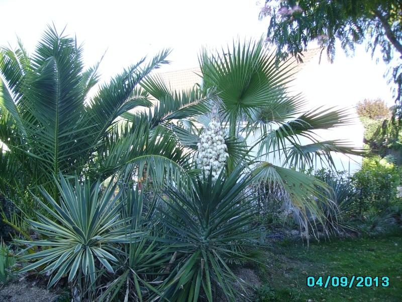 Mon jardin en seine et marne à 7 kms au nord ouest de Melun  Imgp3328