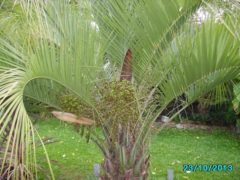 Mon jardin en seine et marne à 7 kms au nord ouest de Melun  Imgp3329
