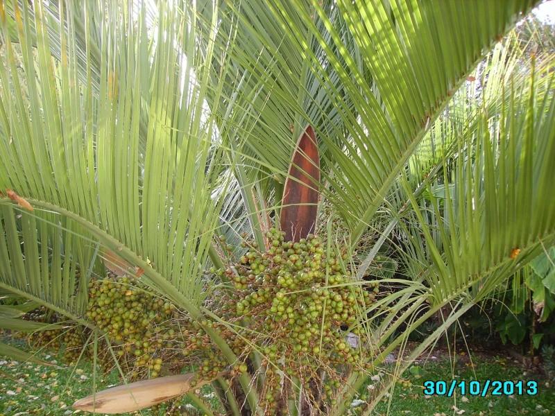 Mon jardin en seine et marne à 7 kms au nord ouest de Melun  Imgp3410
