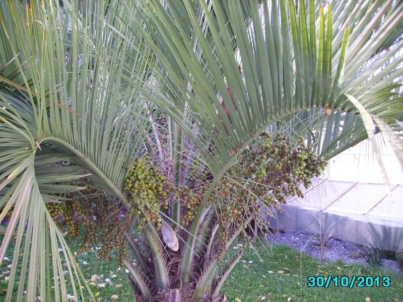 Mon jardin en seine et marne à 7 kms au nord ouest de Melun  Imgp3411
