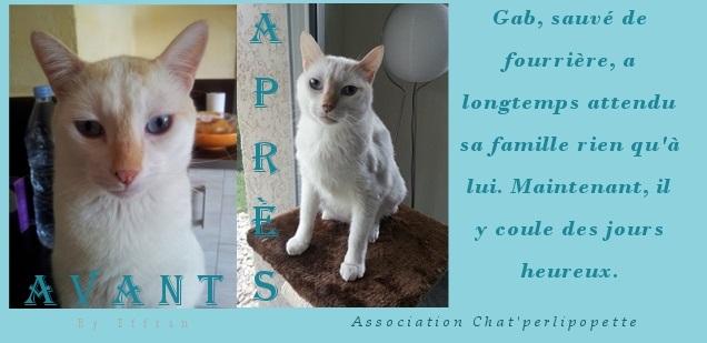 Les avants/après des chats adoptés ou en FA définitive Gab11