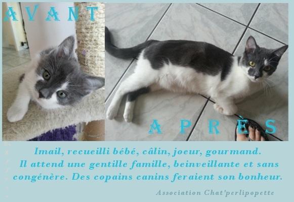 Les avants/après des chats à l'adoption Imail10