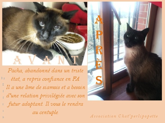 Les avants/après des chats à l'adoption Pacha10