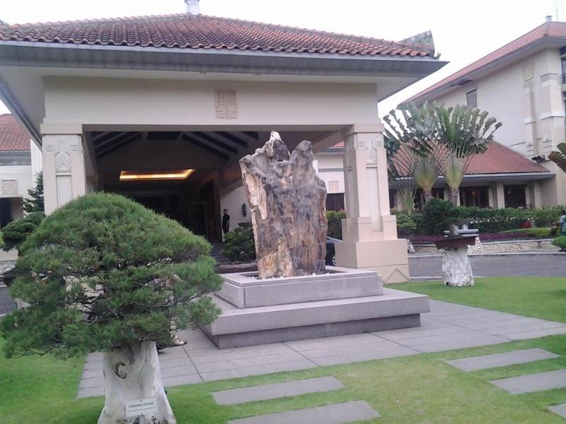 Indonesian Bonsai - Page 3 Parahy11
