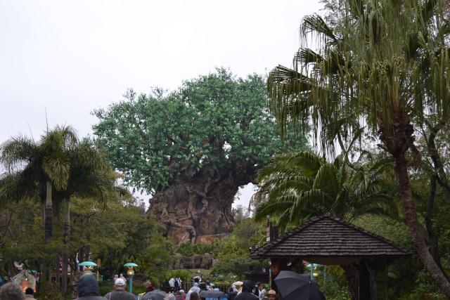 Notre séjour chez Mickey en janvier 2014 - Walt Disney World - Page 10 Dsc_0410
