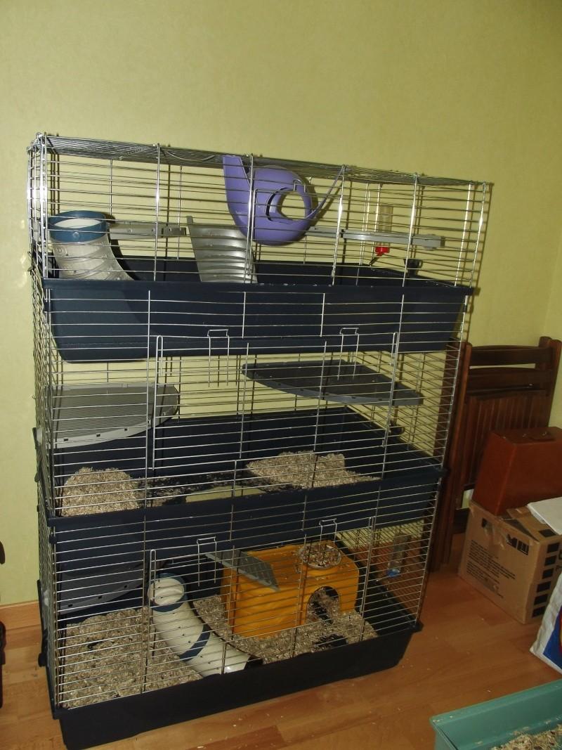 Cherche cage double grenoble Dscf9810