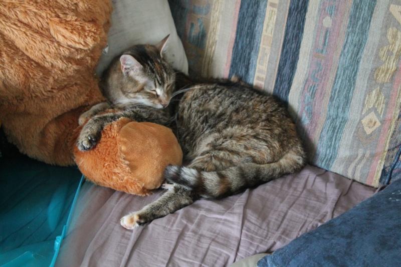 Des nouvelles de Finnoise! <3 Photos12