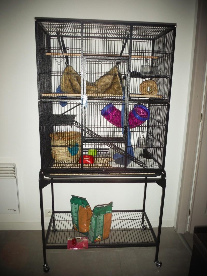 Nouvelle cage des rattus Dscf0210