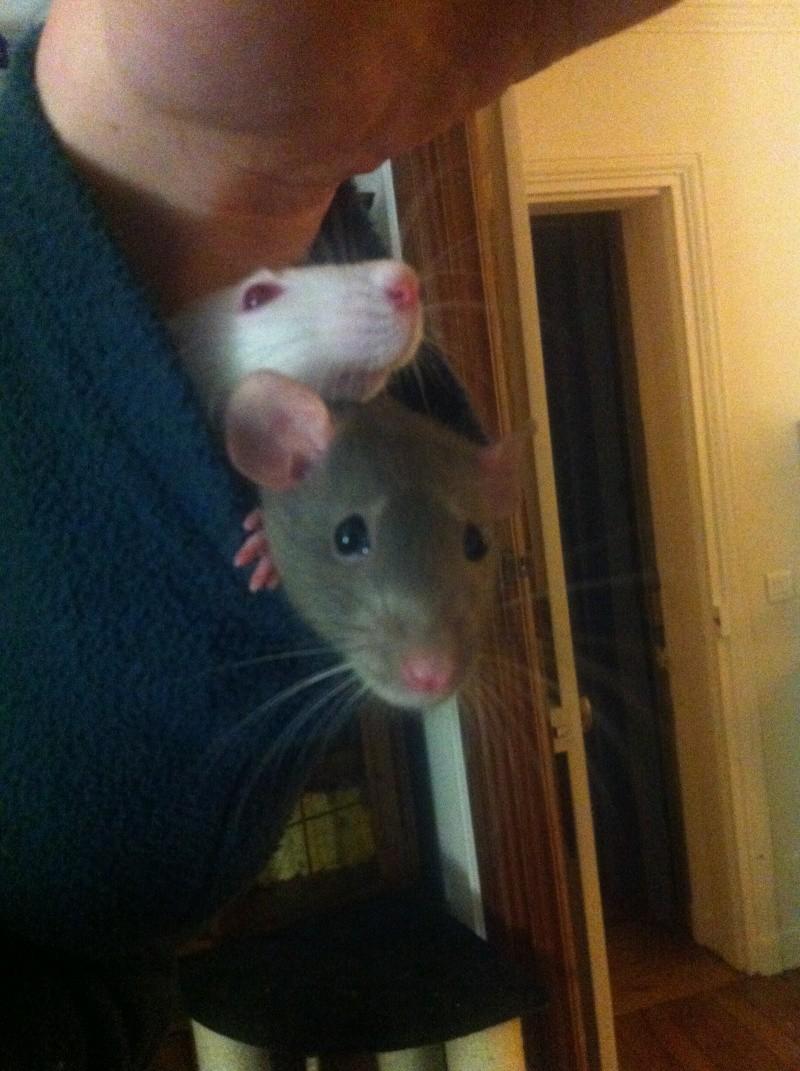 URGENT Les deux ratounes les plus parfaites du monde ! Img_8110