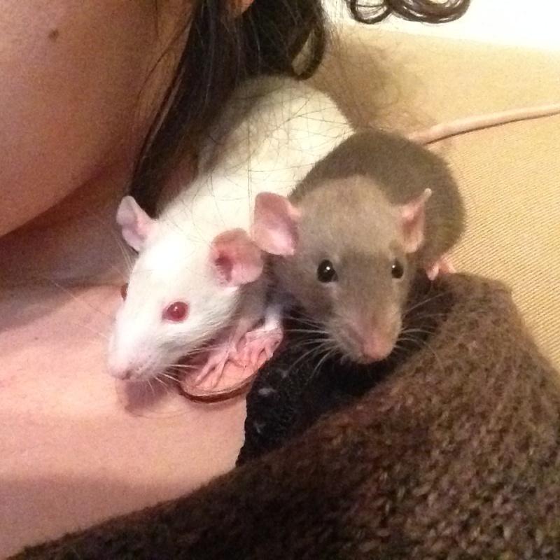 URGENT Les deux ratounes les plus parfaites du monde ! Photo_11