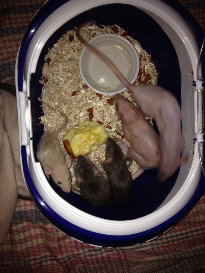 Une nouvelle vie pour cette ratoune qui l'a bien méritée 10173410