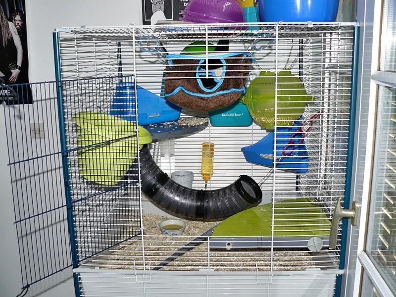 grande porte - Photos de vos cages P1160414