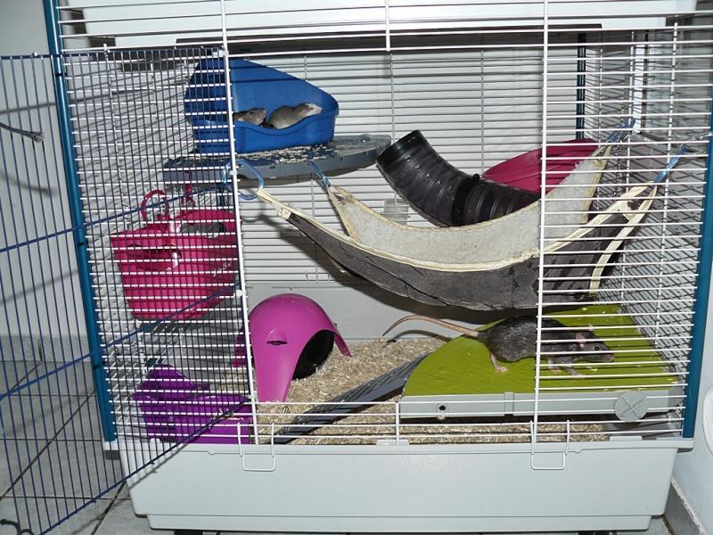 grande porte - Photos de vos cages P1160415