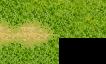Demande de tileset d'herbe et chemin de terre Bout_d10