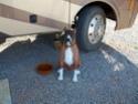 camping car poids lourds au Maroc 100_3814