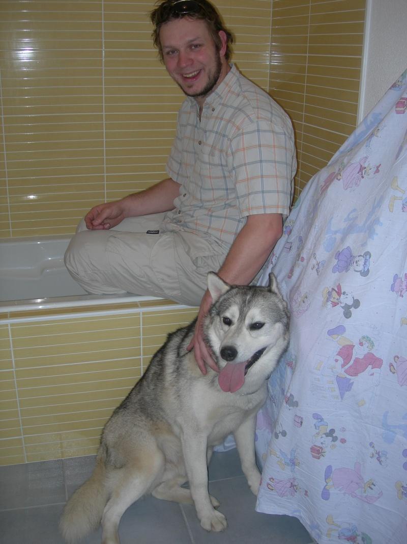Gerry Black Sibérian Husky 3ans, asso Home Wanted ( départ 60)  - Page 6 Dscn8514