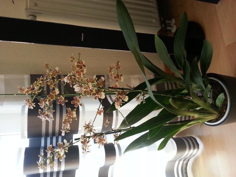 Was sind dies für Orchideen 20140314
