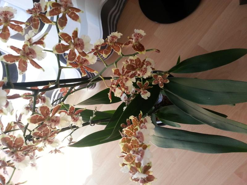 Was sind dies für Orchideen 20140315