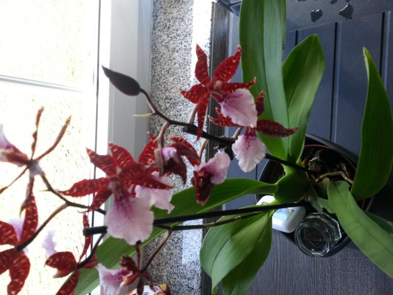 Was sind dies für Orchideen 20140316