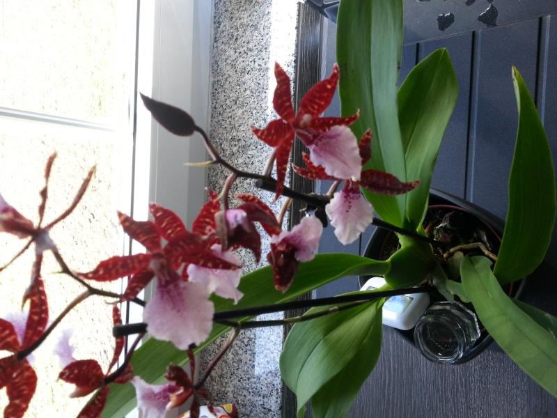 Was sind dies für Orchideen 20140317