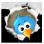kita ese pajaro Twitte11