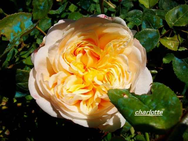 charlotte  Mai_0523
