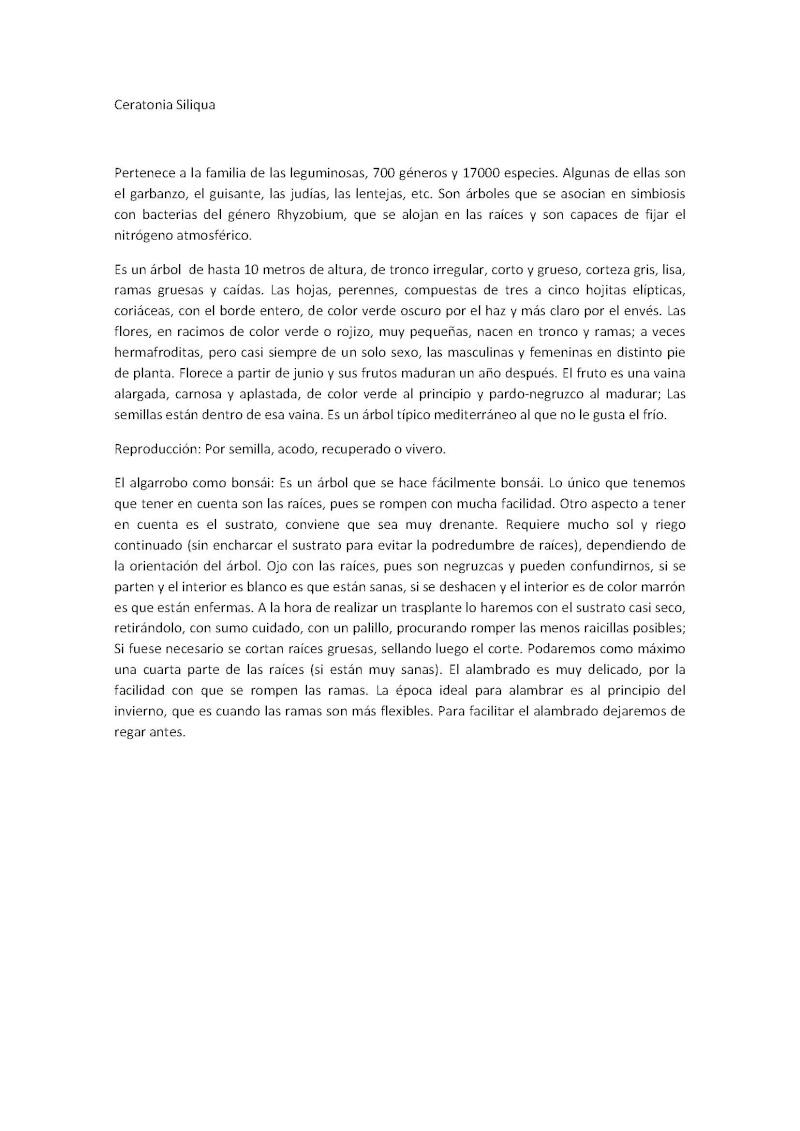 El Algarrobo Algarr10