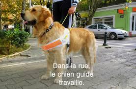 Le Chien Guide  Talach13