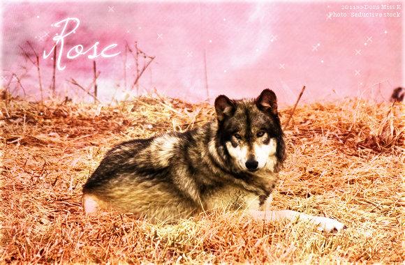 Rose - Adulte - Libre Rose1011