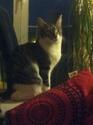 Ivanhoé chaton hyper câlin et attachant né le 9 avril 2013 (adopté par sandrine59 ) - Page 2 Img_1811
