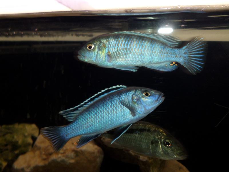 cherche du nom de mes poissons Sam_0314