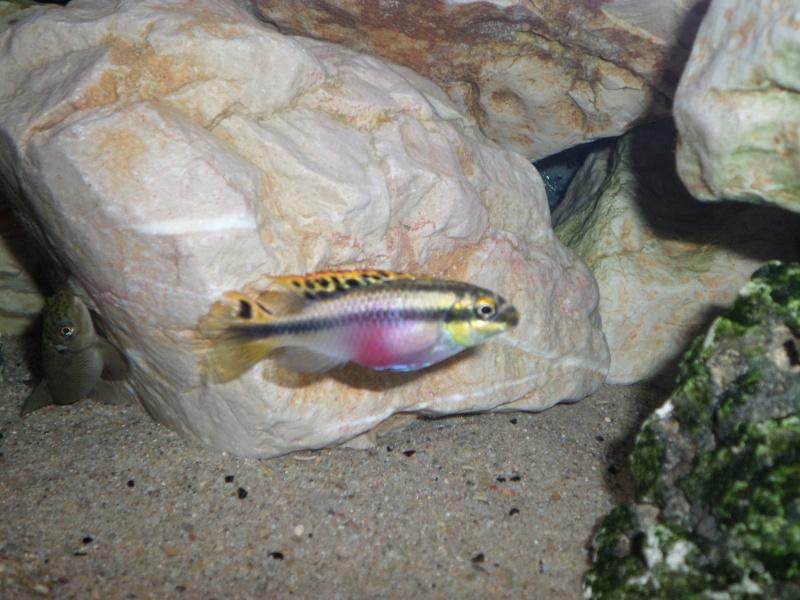recherche du nom de mes poissons 4 Sam_0315