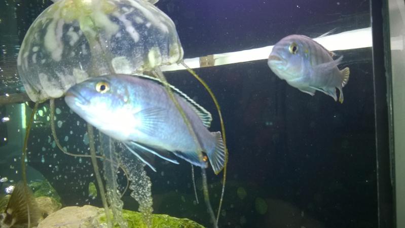 cherche du nom de mes poissons Wp_20110