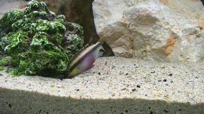 recherche du nom de mes poissons 4 Wp_20113